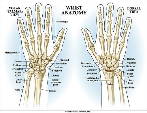 Hand Anatomy Fnp Ms Pinterest Hand Anatomy Anatomy And Medical