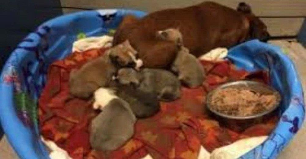 They had already brutally shot the senior dogs and had a grave all dug out for the puppies.