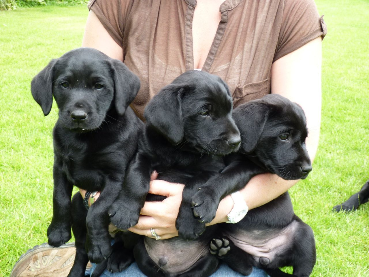 Good Labrador Retriever Black Adorable Dog - 7fdd6e116aa32566f96bd82d79d4bb11  Snapshot_344723  .jpg