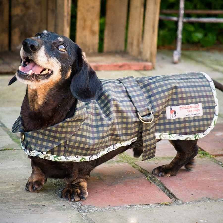 Dachshund Waterproof Dog Coat Dog Coats Waterproof Dog Coats