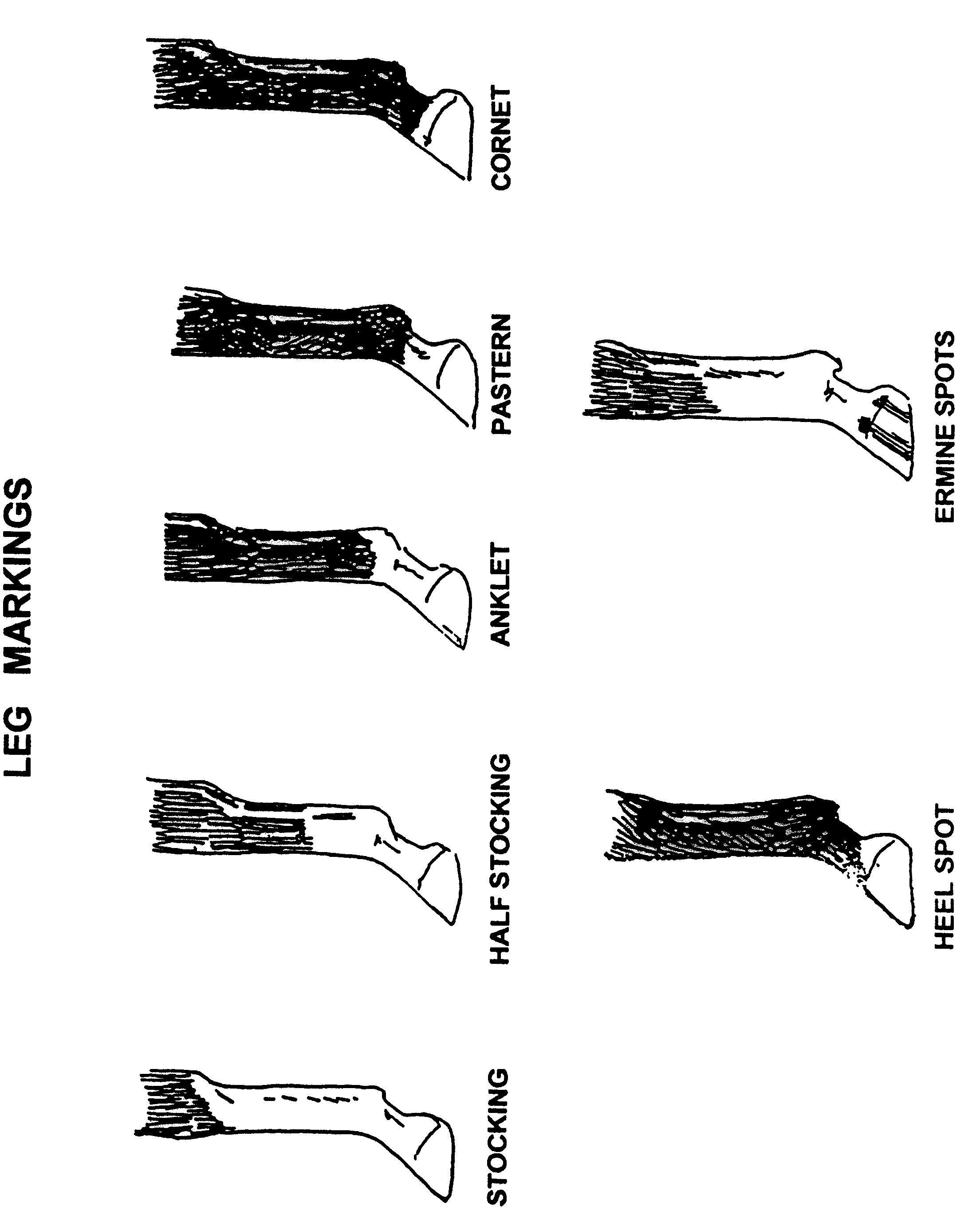 Leg Markings