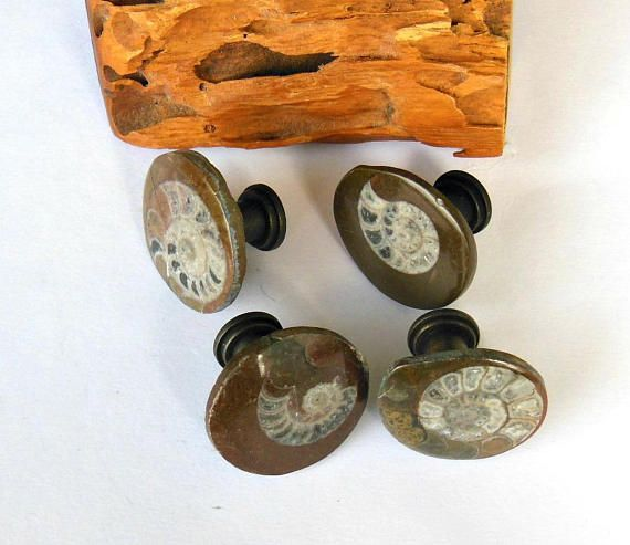 Fossilized Ammonite Button Cabinet Knobs Organic Natural