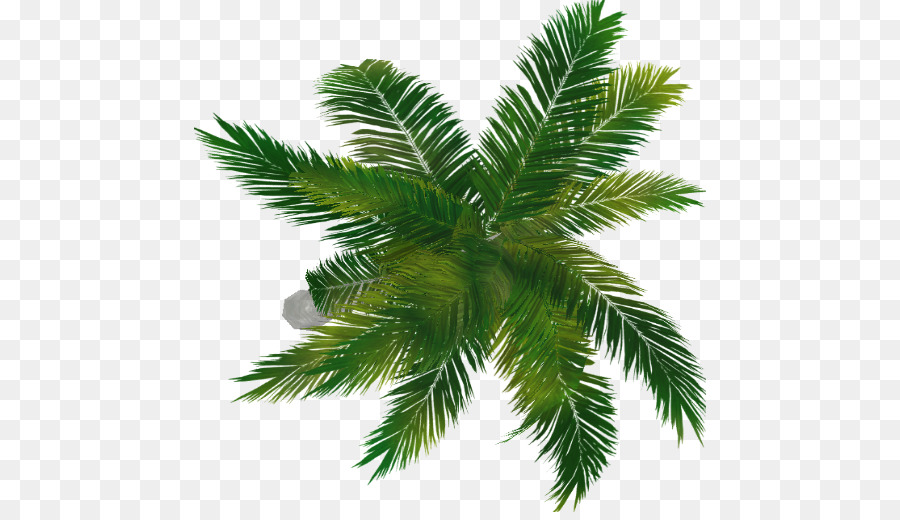 Palm Oil Tree Clipart Tree Leaf Plant Transparent Clip Art Trees To Plant Tree Plan Png Family Tree Background