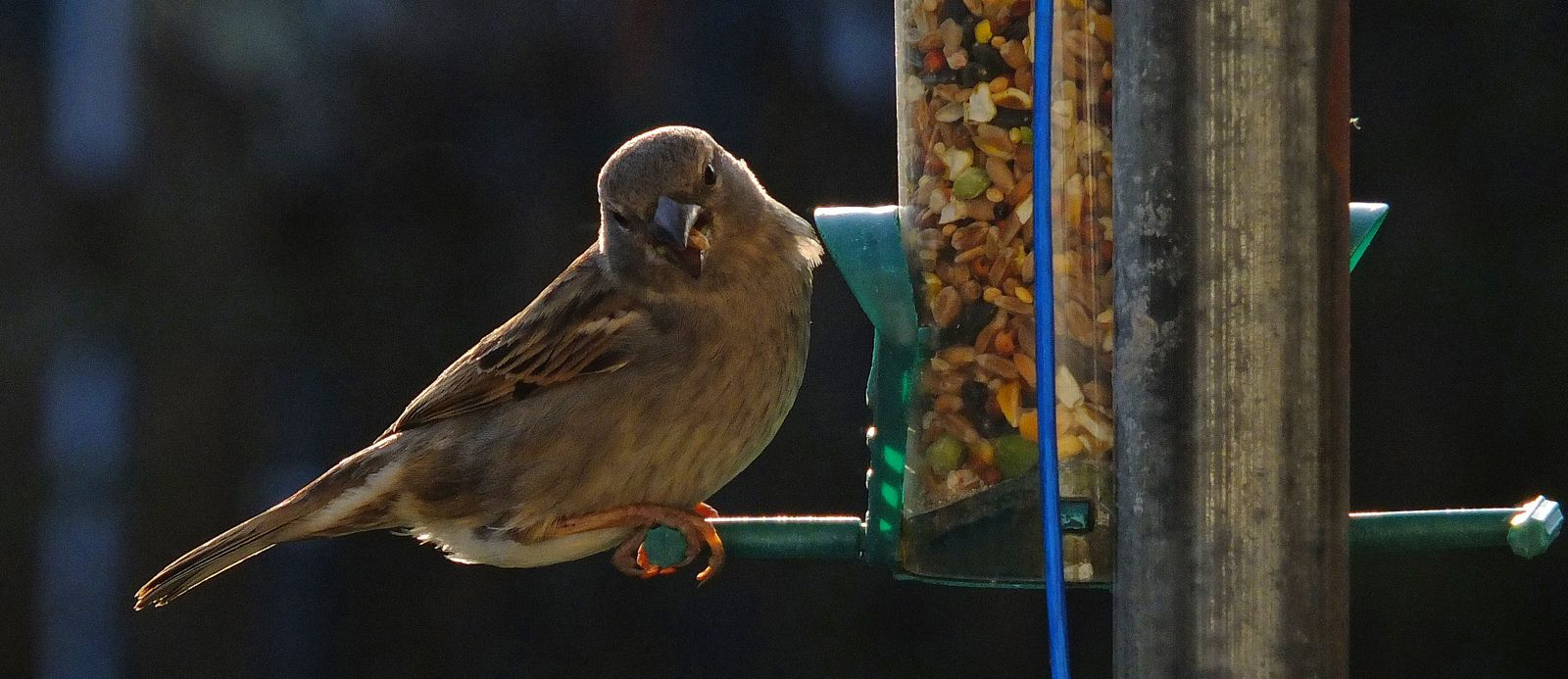 Hi ISO sparrow