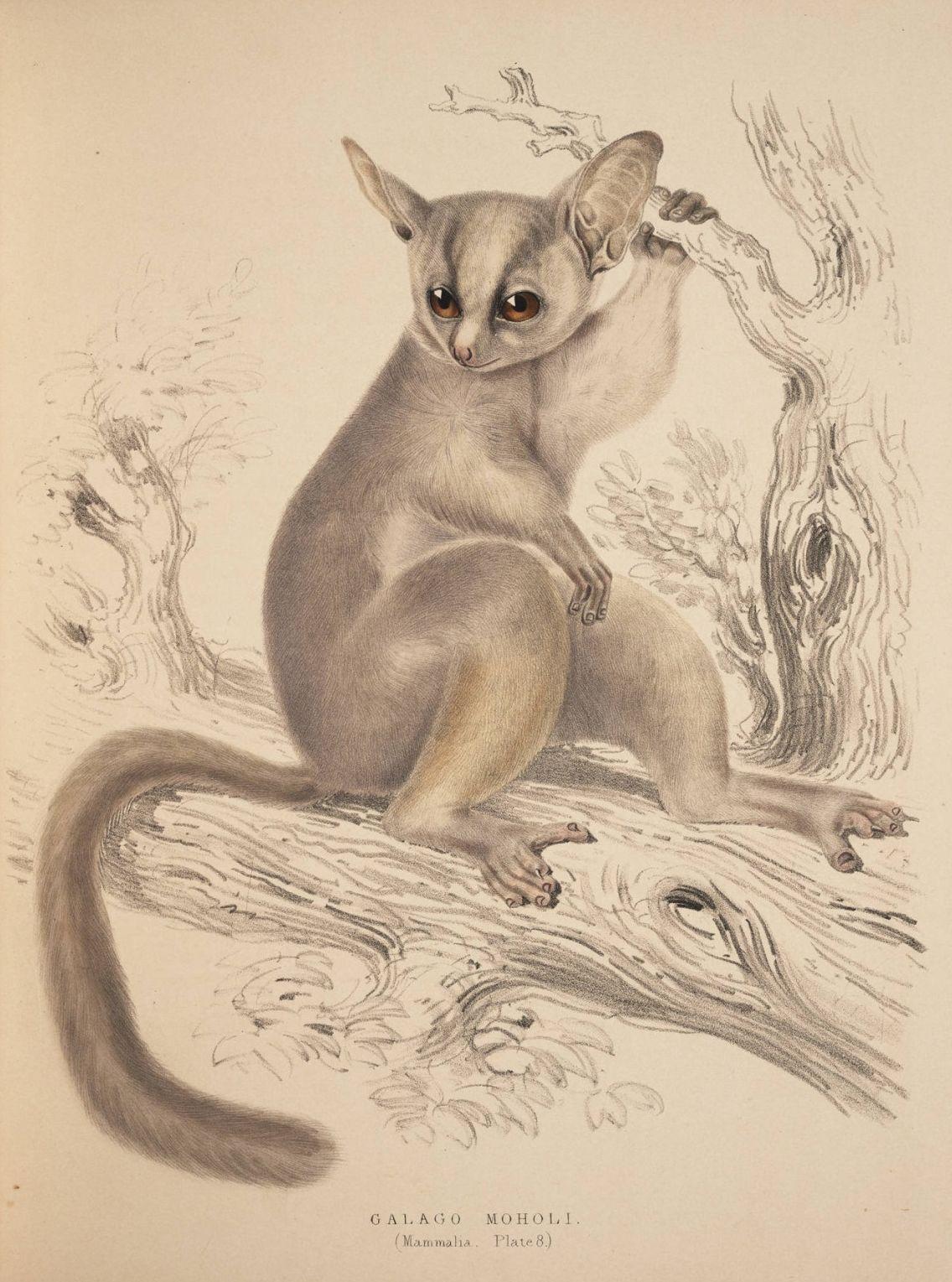 Antique print 1833 JOHN RAY English Naturalist