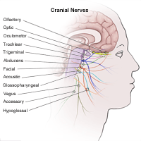 cranial nerves - FTZ Flashcards | Quizlet | Nursing | Cranial nerves