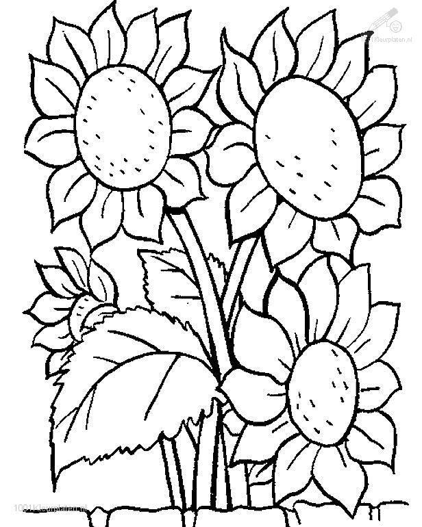 1001 Coloringpages Plants Flowers Flowers Coloring Page Sunflower Coloring Pages Coloring Pages Flower Coloring Pages