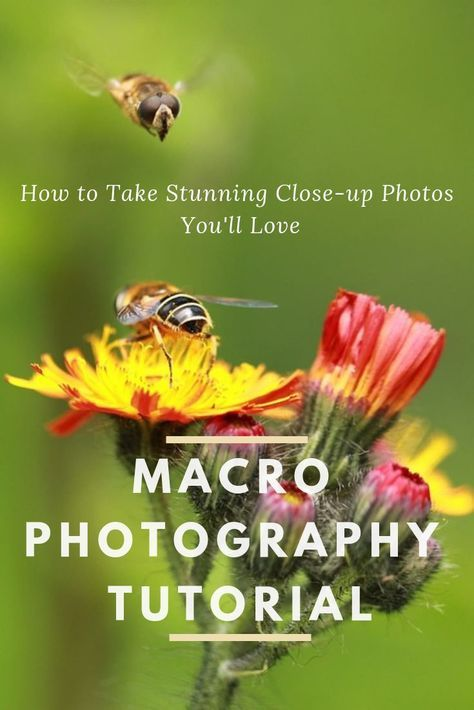 Macro Photography Tutorial  How To Take Stunning Close