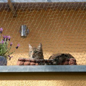 Red Reforzada Protectora De Ventanas Para Gatos Tienda De Gatos Gatos Protectores De Ventanas