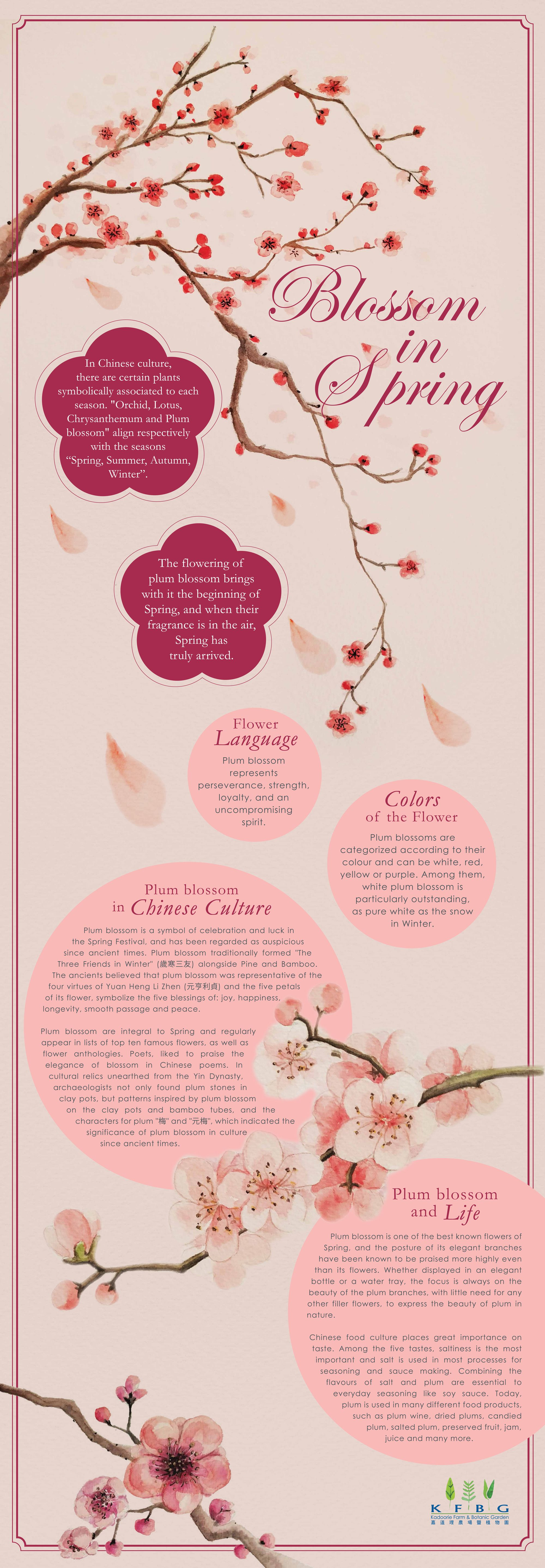 Blossom In Spring Plum Blossom Meaning Flower Meanings Blossom