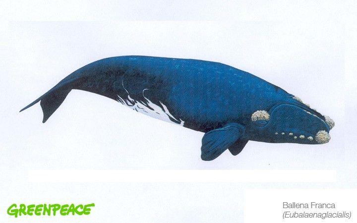 Conoce a los mamíferos marinos que están en aguas mexicanas ...