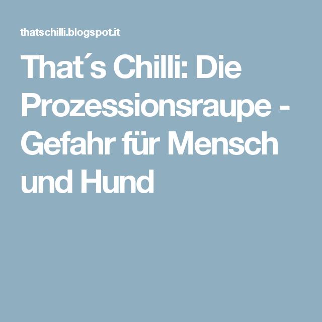 That´s Chilli: Die Prozessionsraupe - Gefahr für Mensch und Hund