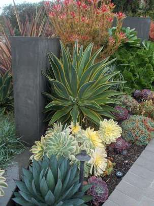 BEST SUCCULENT GARDEN DESIGN IDEAS 58