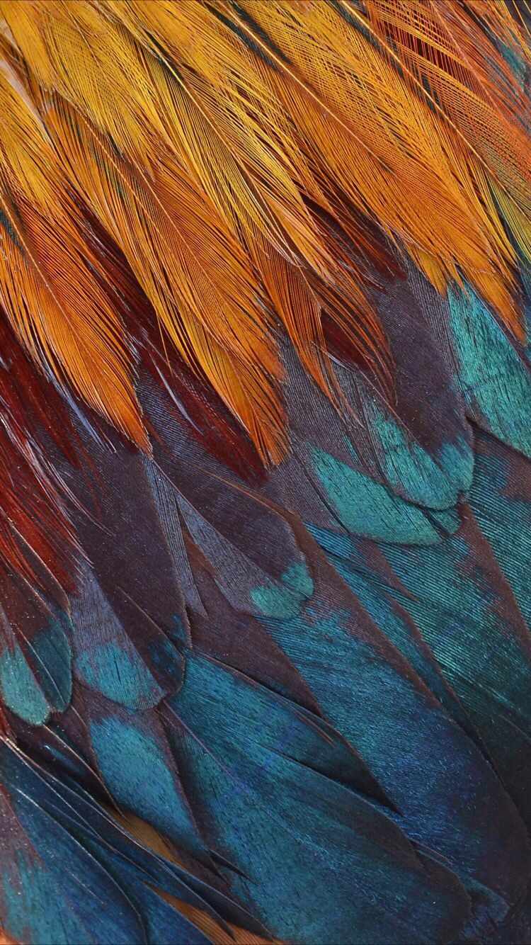 Colorful Feathers Wallpaper For Your Iphone Xr From Everpix