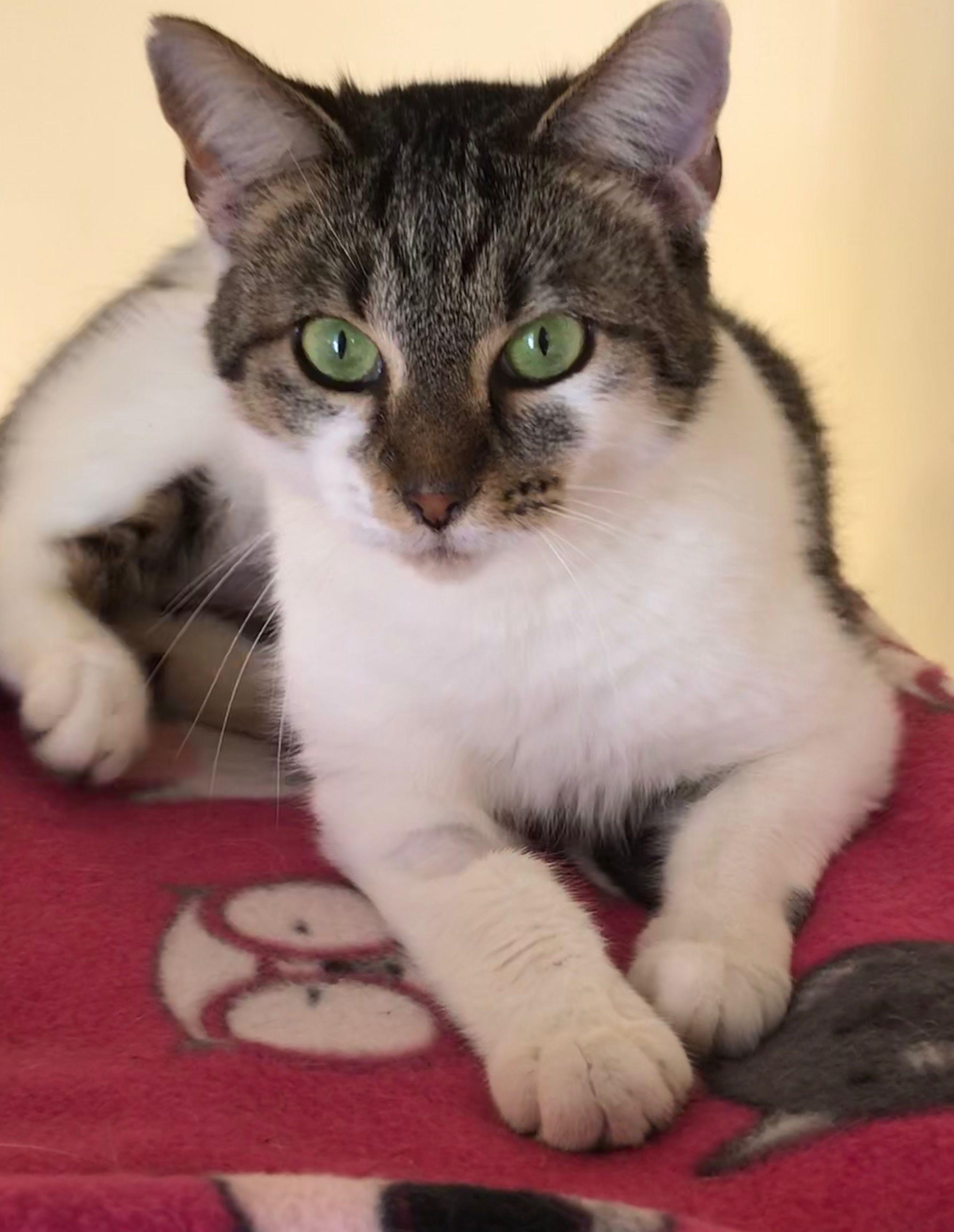 Sugar Loaf Tabby, Adoption, Furry friend