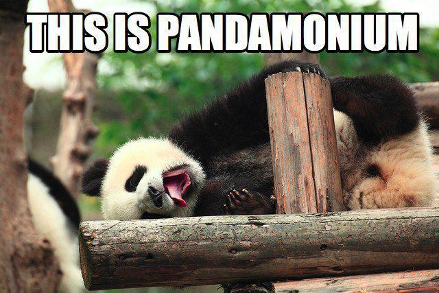 PANDA PUN