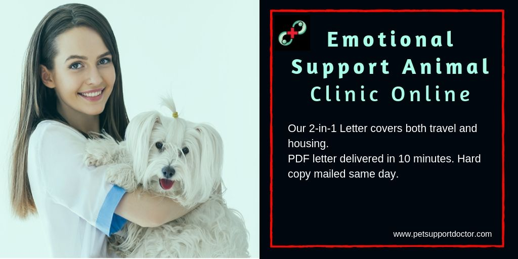 Emotional Support Animal Clinic Online | Emotional support ...