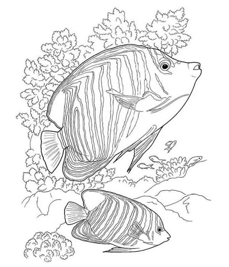 Dover Sea Life Coloring Page - #coloring #dover #Life #