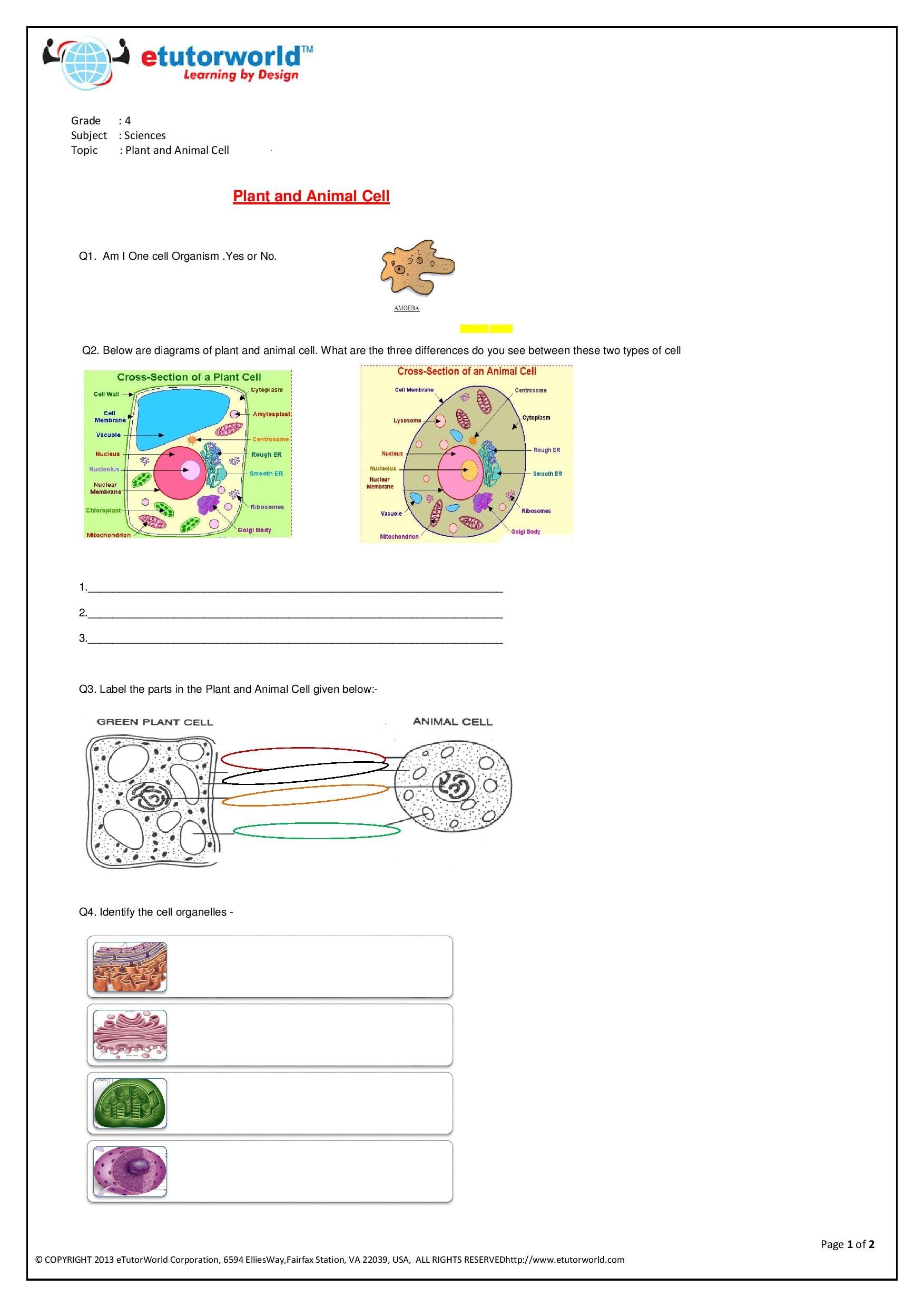 4th Grade Science Worksheets
