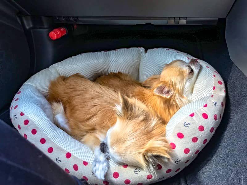 犬とのキャンプを100 楽しむために たくさんの失敗から学んだ注意点を伝授します 犬 キャンプ 犬 バッグ