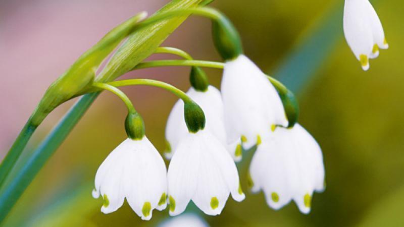 Photo of 11 beautiful flowers for Australian winter gardens