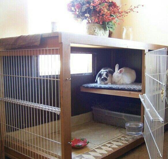 pingl par hope sur darmo pinterest cage lapin lapin et maison lapin. Black Bedroom Furniture Sets. Home Design Ideas