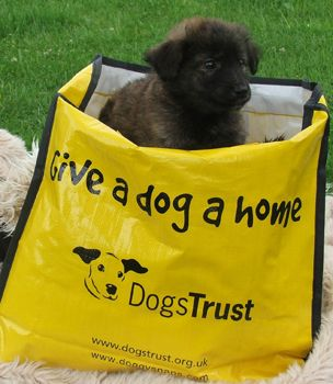 Staff At Dogs Trust Ballymena Are Currently Caring For Seven