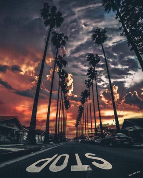 Beautiful Nature Los Angeles: Stop! Los Angeles At Sunset With Palm Tree Lined Street