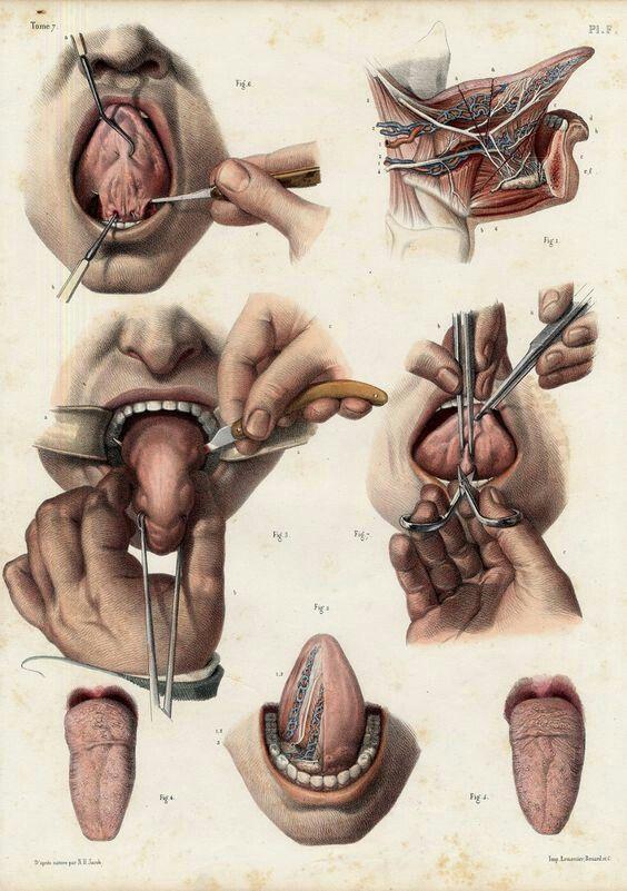 Pin de Doom Waffle en Morbid | Pinterest | Anatomía, Ilustracion ...