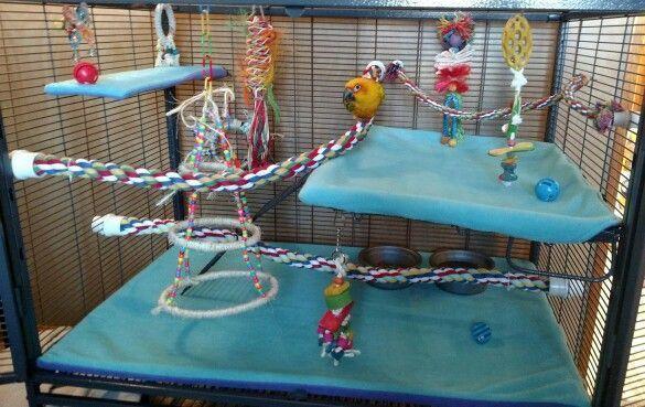 Special Needs Parrot Cage. Phoenix's left leg is paralyzed ...