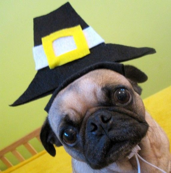 Is cute or just plain silly? Do you dress up your pet for Turkey Day? Click image for more photos.