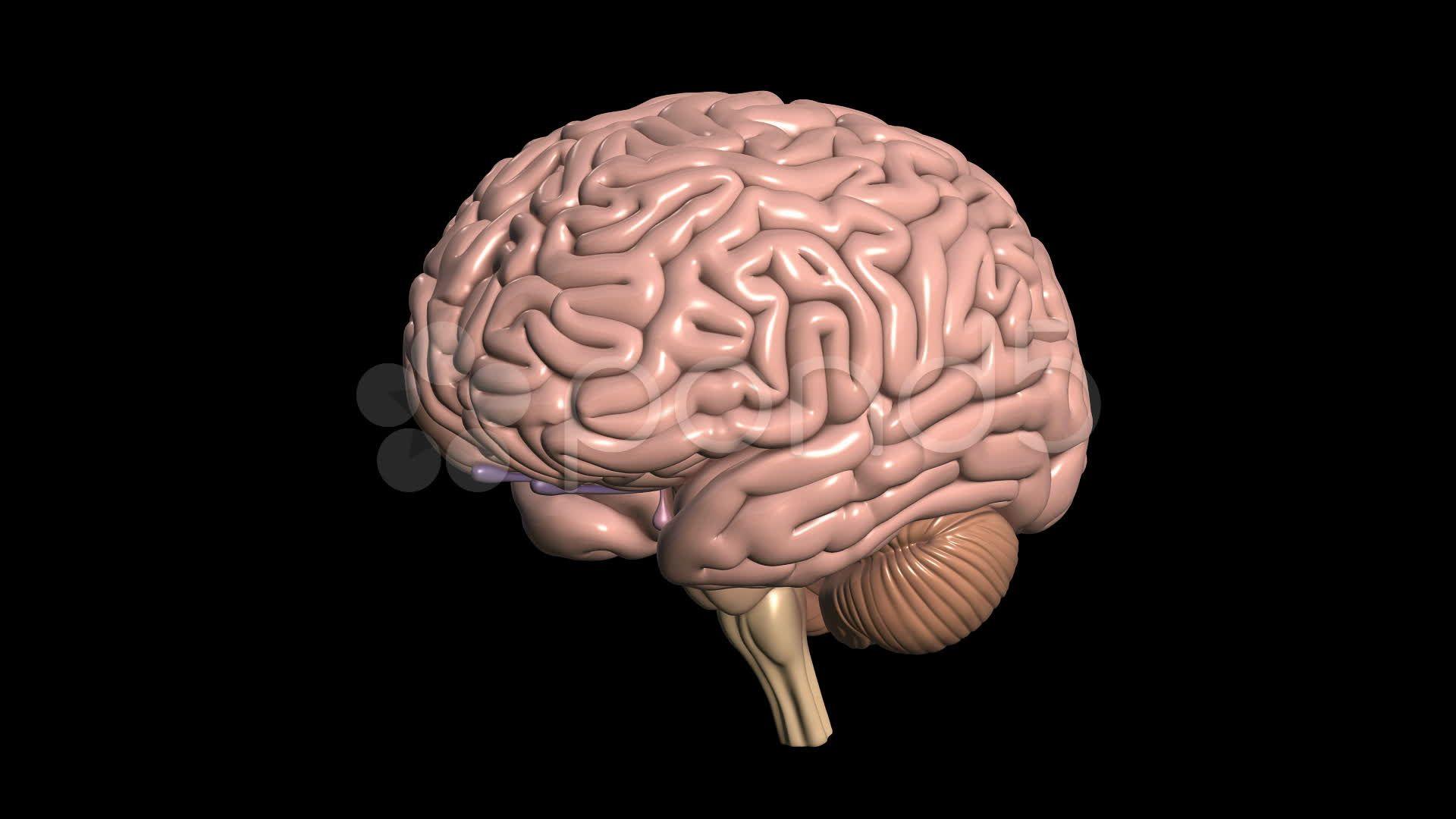 Image for 3D Brain Wallpaper Coll   brain   Pinterest   Brain ...