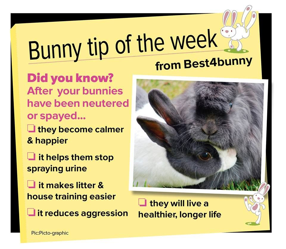 Bunny Tip Week 32 So Many Benefits To Having Your Bunnies Neutered Or Spayed I M Just Apprehensive About The Vets Around Here Bunny Care Bunny Mom Pet Bunny