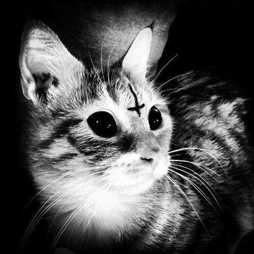 Gallery For Satanic Cats Tumblr Creepy Cat Evil Cat Satanic Cat