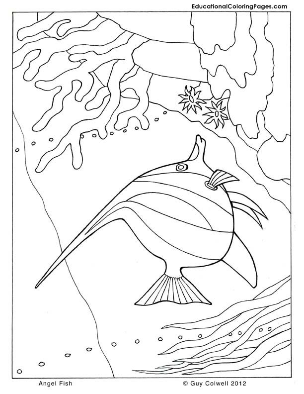 angel fish coloring pages | Animal Coloring Books | Pinterest ...