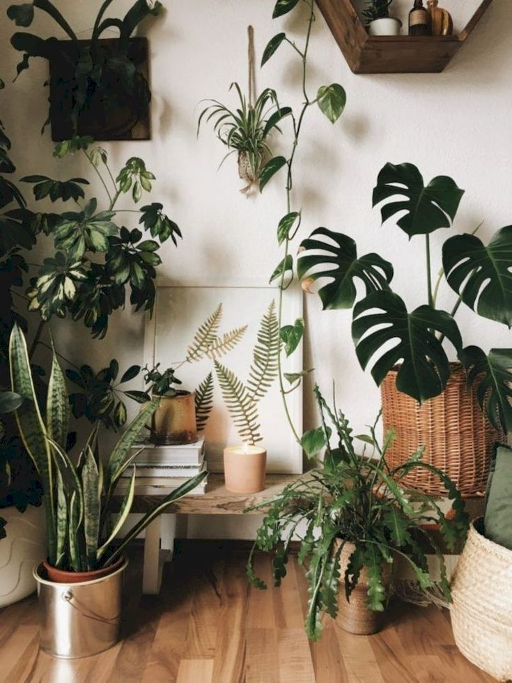 Erstaunliche Innendschungel-Ideen zum Hauptdekor  Les fleurs