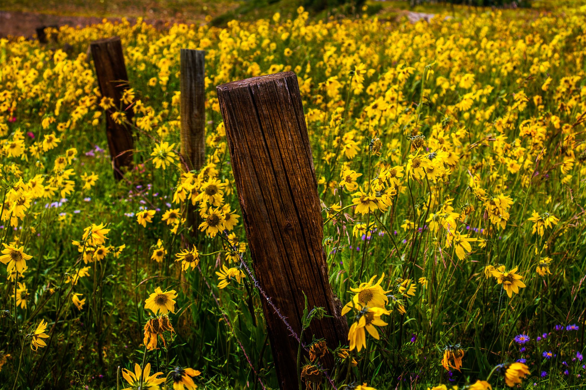 The Daisy Patch by Stephen K. Miller on 500px Daisy