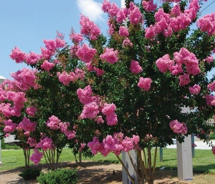 piante sempreverdi da giardino resistenti al freddo - cerca con ... - Piante Sempreverdi Da Giardino