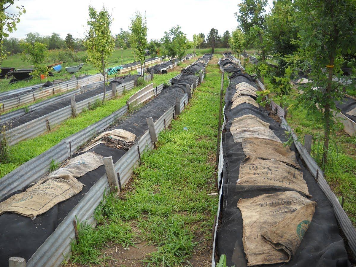 Be a Worm Farmer | Worm farm, Worm farm diy, Vermicomposting