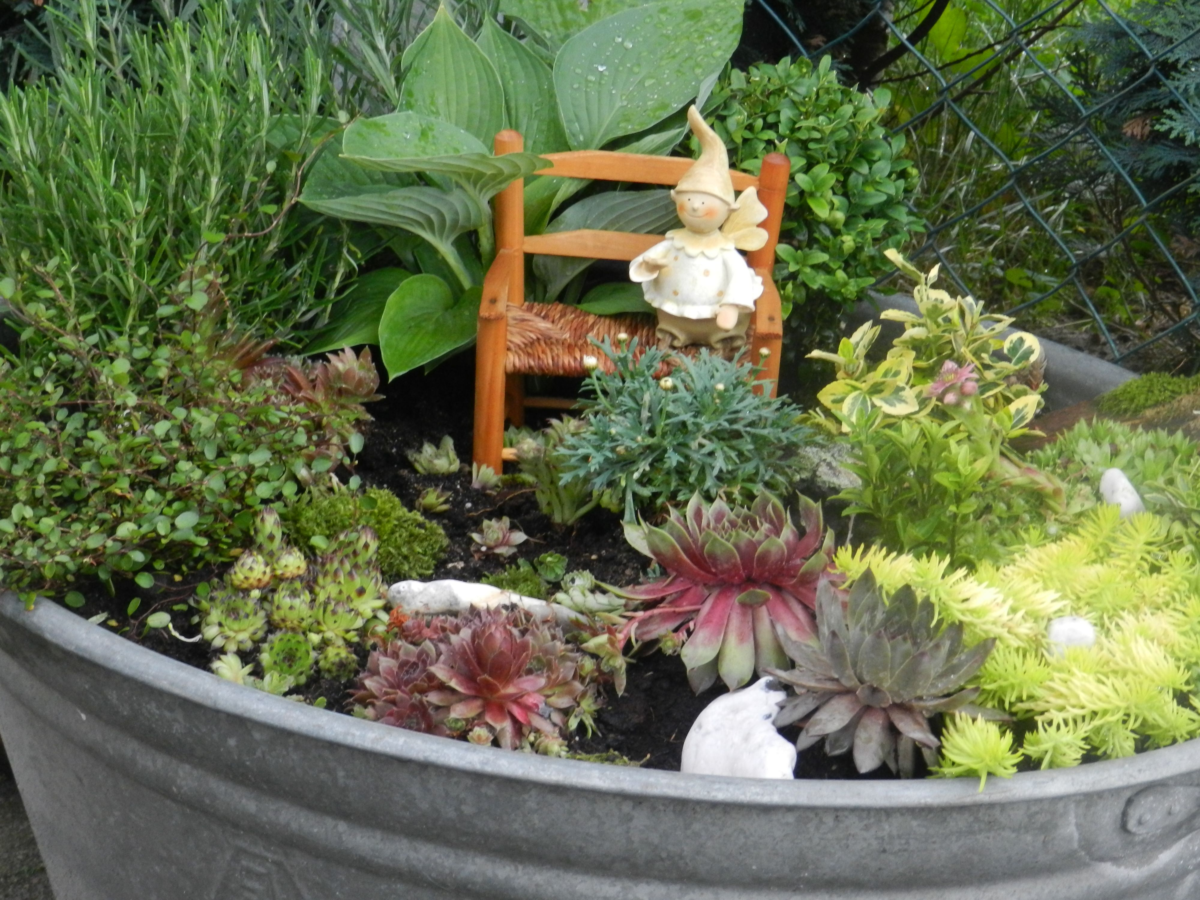 zinkwanne bepflanzt sch nes im garten pinterest. Black Bedroom Furniture Sets. Home Design Ideas