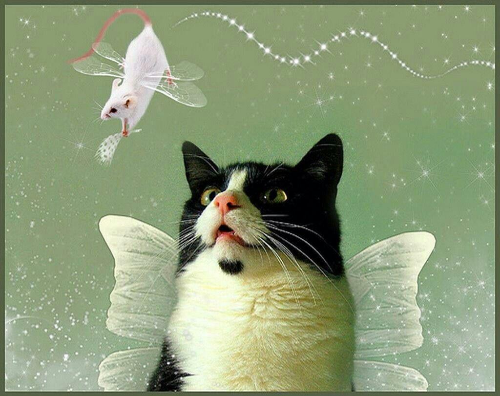 Pin de Martita Sepulveda Huidobro en gatos &ratones
