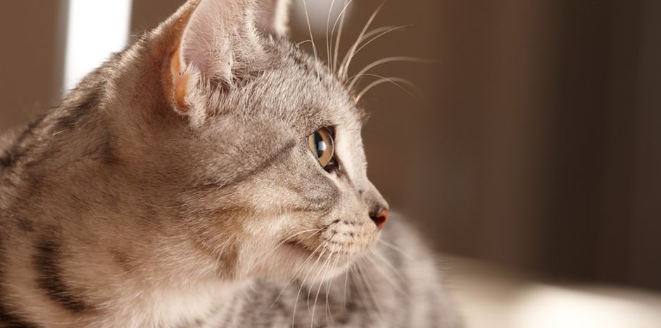 Cat Body Language Purina Dogs Cats Cat Behavior Cats