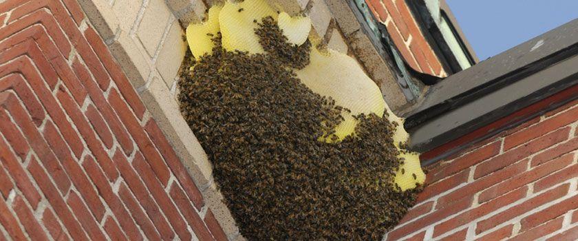 wespennest in de hoek op de muur bij een serre wespennesten pinterest. Black Bedroom Furniture Sets. Home Design Ideas