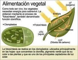 Resultado De Imagen Para La Fotosintesis Proceso De La Fotosintesis Fotosintesis Fotosintesis De Las Plantas