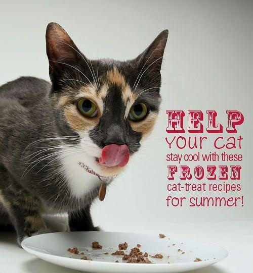 Helfen Sie Ihrer Katze, diesen Sommer cool zu bleiben, mit diesen Frozen Cat-Leckereien! -