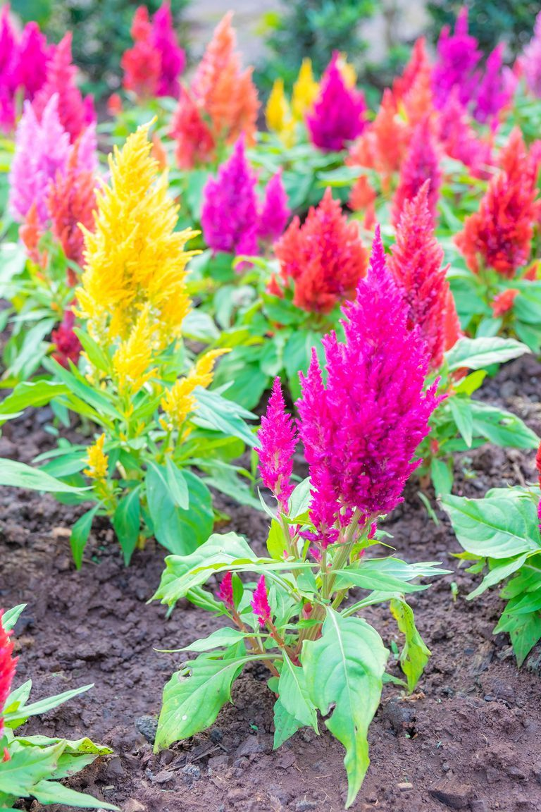 The 15 best annual flowers you need to plant in your yard flowers the 15 best annual flowers you need to plant in your yard izmirmasajfo Choice Image