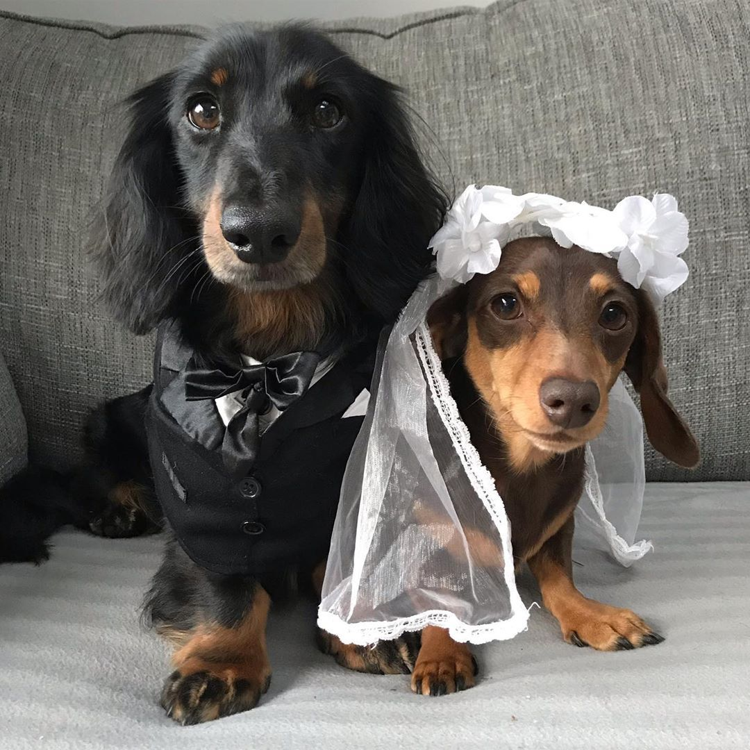 Dachshund Products Apparel And Gifts Dachshund Weenie Dogs