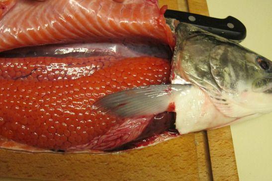 Marinating Fresh Salmon Roe Ikura Salmon Roe Salmon Salmon Health Benefits