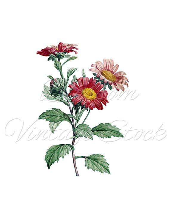 Flowers Print, Antique Botanical Print, Clipart, Digital Image, Vintage Illustration for Print, Digital Artwork - INSTANT DOWNLOAD - 2157