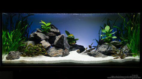 Malawi Aquarium Led Beleuchtung | Aquarium Hauptansicht Von Green Malawi Scape Fish Freshwater